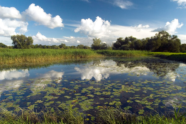 Oderwiesen bei Reitwein